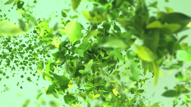 Exploding green tea leafs in 4K High quality exploding green leafs in 4K ingredient stock videos & royalty-free footage