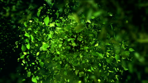 vídeos de stock e filmes b-roll de exploding tea leafs in 4k - folha