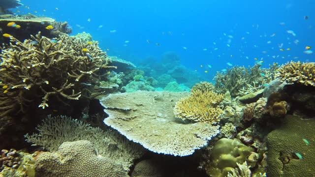 水中の美しい風景を探検 - 海洋生物点の映像素材/bロール