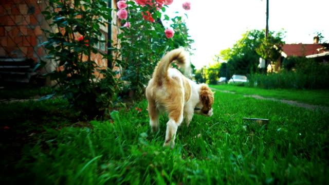 Explorer dog video