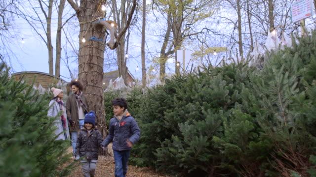 Exploring a Christmas Tree Farm