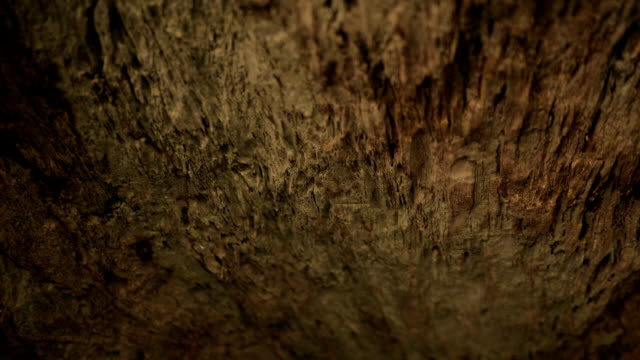 exploring cave - pietra roccia video stock e b–roll