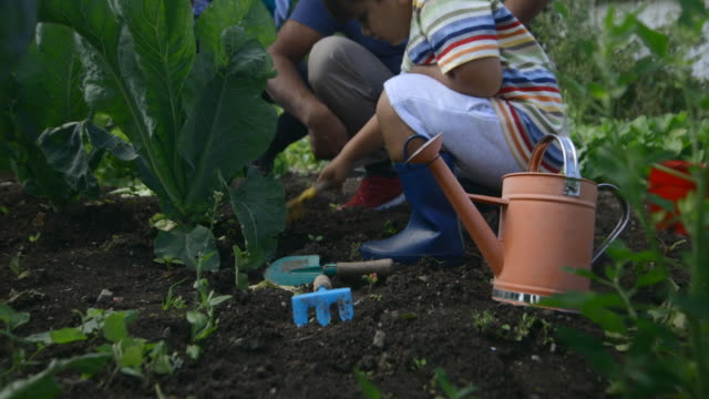 Exploring In The Soil Young boy exploring in the soil and helping to plant some veg vegetable garden stock videos & royalty-free footage