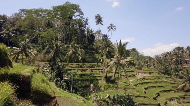 Exploring Rice Plantations in Tegalalang Near Bali