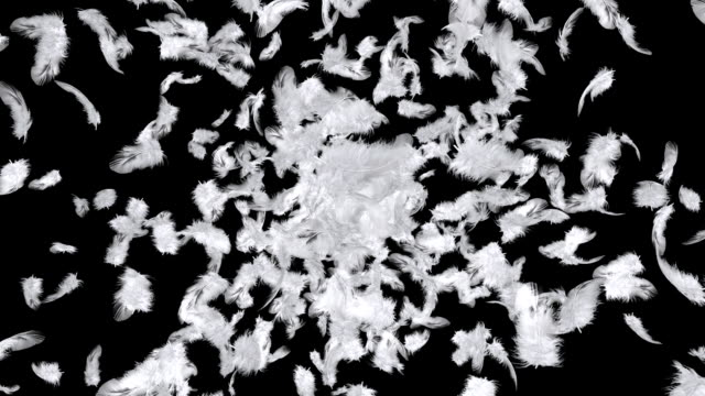 Explosion of feathers video