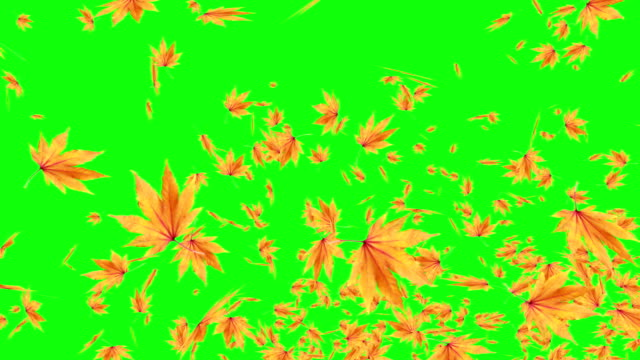 Explosive Autumn Falling Leaves Green Screen Chroma Key Editable Background Stock Video Download Video Clip Now Istock