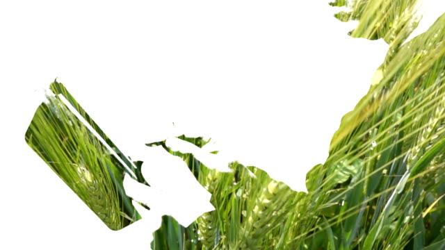 vidéos et rushes de exposition de l'homme d'affaires à l'aide de tablette avec le champ d'orge - seigle grain