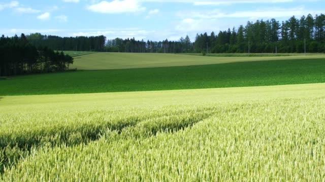 北海道の豊富な麦畑 - 北海道点の映像素材/bロール