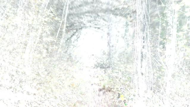 stockvideo's en b-roll-footage met buitengewone lopen-vervallen: pad through deciduous bos, herfst - helder (fade in/out) - infaden