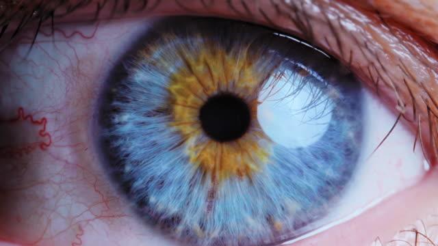 Extreme close up human eye iris. Human eye iris contracting. Extreme close up. leaf vein stock videos & royalty-free footage