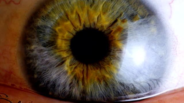 vidéos et rushes de très gros plan des yeux iris - nervure