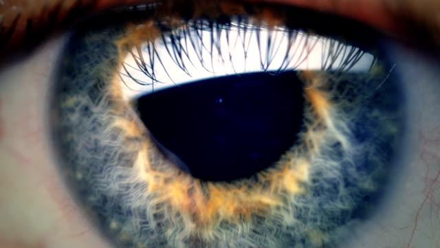 Extreme close up human eye iris Human eye iris contracting. Extreme close up. leaf vein stock videos & royalty-free footage