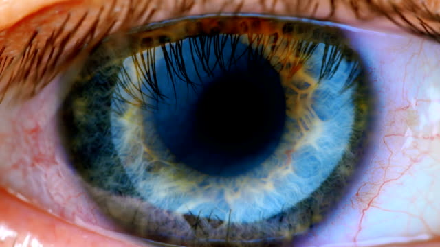 Extreme close up human eye iris Human eye iris contracting. Extreme close up. blood vessel stock videos & royalty-free footage