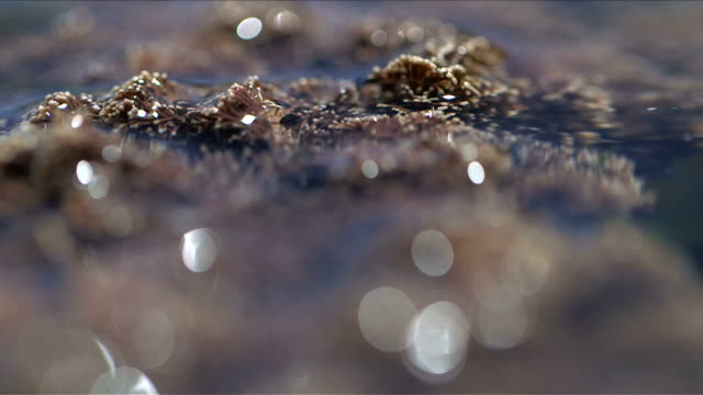 Extreme close up shot of coral and seaweed in a crystal cleaar tidal pool in Scarborough, South Africa video