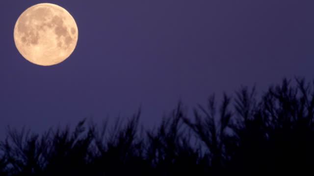 extreme moon  closeup - colore saturo video stock e b–roll