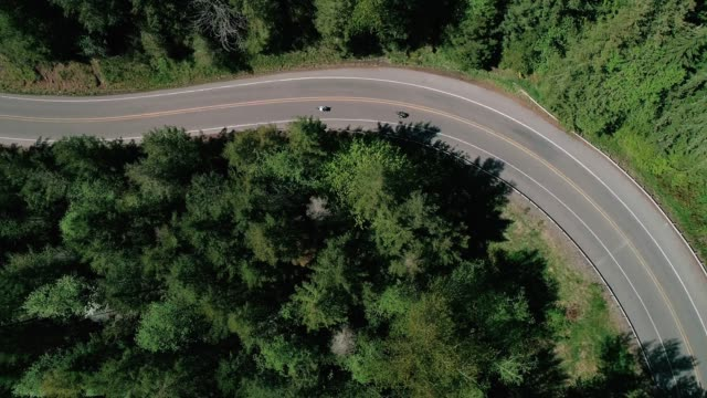 Extreme Mototrcycle Aerial Forest Highway Slow Motion Drone shot filming motorcycles winding sharp corners in wilderness motorcycle stock videos & royalty-free footage