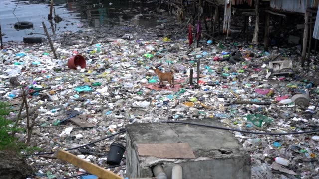 extreme pollution in malaysian village with dog walking on garbage - malese video stock e b–roll