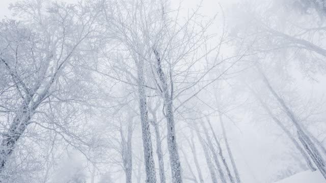 condizioni meteorologiche estreme in inverno, neve pesante nel parco - albero spoglio video stock e b–roll