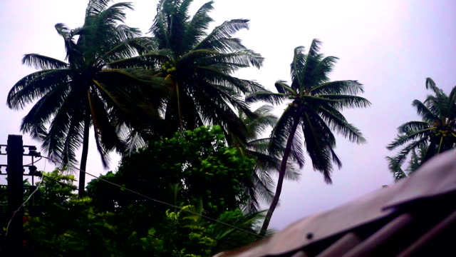 Extreme Weather : Typhoon Storm Bending Coconut Trees video