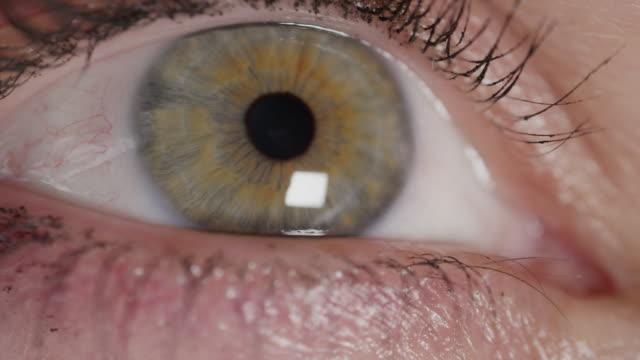 SLOW MOTION MACRO: Eye lid opens, green eye gazes intently into bright light. video