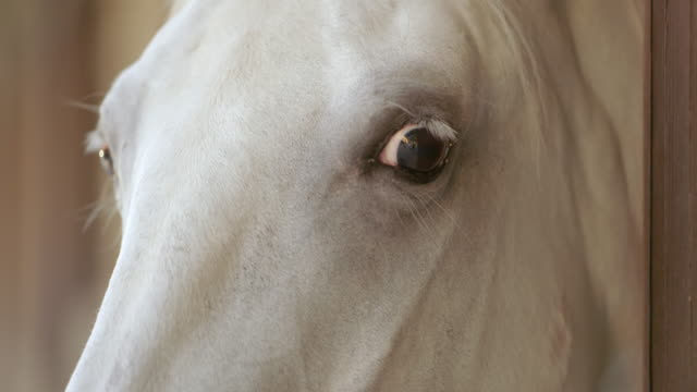 LD Eyes of a white horse