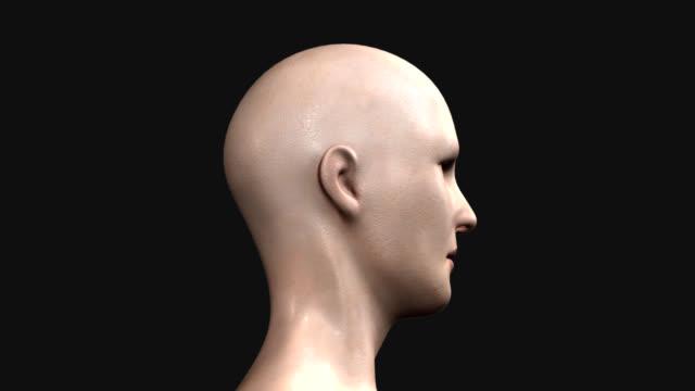 顔の部位 - 人の筋肉点の映像素材/bロール