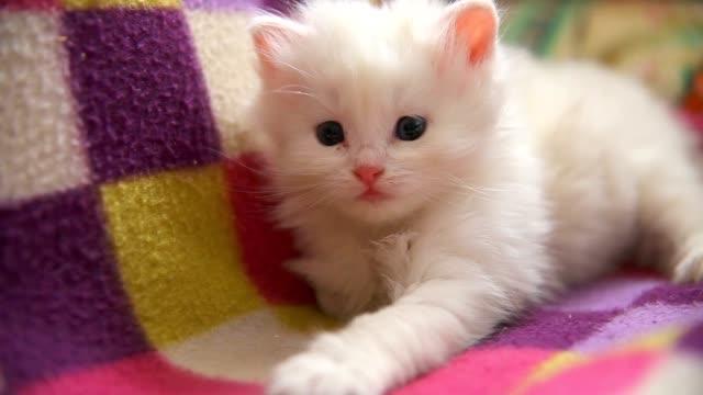 face big white kitten lying asleep on another white kitten video