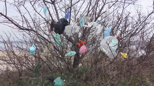 Face masks and plastic debris on branches of trees. Coronavirus (COVID-19) is contributing to pollution, as discarded face masks clutter parks of the city along with plastic trash. Movement forward.