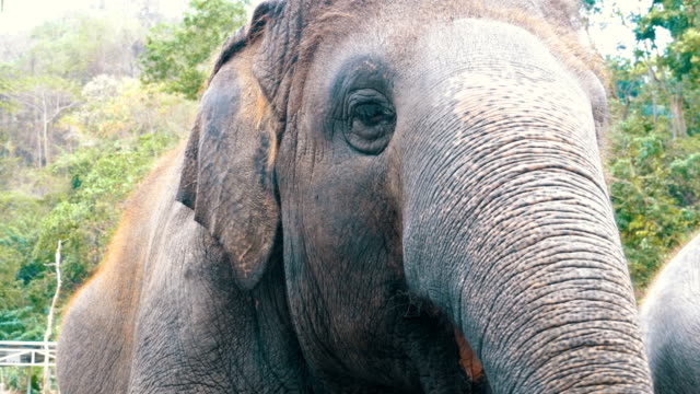 Face of an elephant video