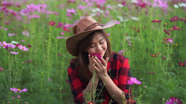 facial expression by Asian mature woman in cosmos meadow , hand running over flowers