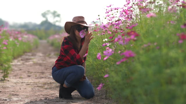 facial expression by Asian mature woman in cosmos meadow , relaxation with alternative lifestyle , retirement , using smart phone for selfie with flowers