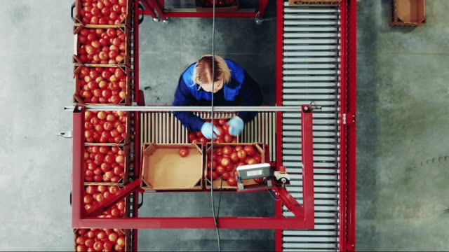 Factory conveyor and a woman sorting tomatoes in a top view Factory conveyor and a woman sorting tomatoes in a top view. 4K conveyor belt stock videos & royalty-free footage