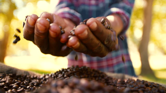 fair trade è meglio l'agricoltura per produrre coffee bean - coffee farmer video stock e b–roll