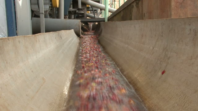 Fairtrade coffee beans transported in water at coffeefactory video