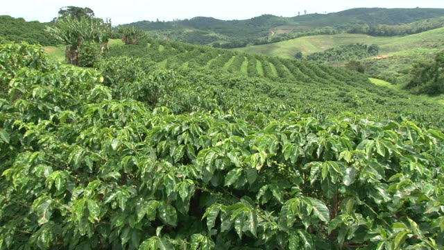 Fairtrade coffee plantation in Brazil Fairtrade coffee plantation in Brazil plantation stock videos & royalty-free footage