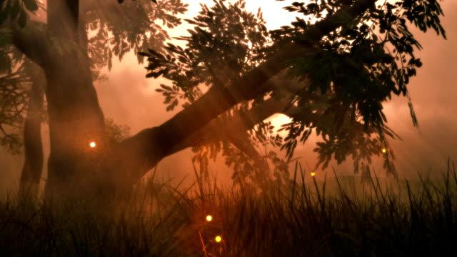 Fairy Lights Fireflies Summer Meadow Magic Fantasy Woods Sunset LOOP video