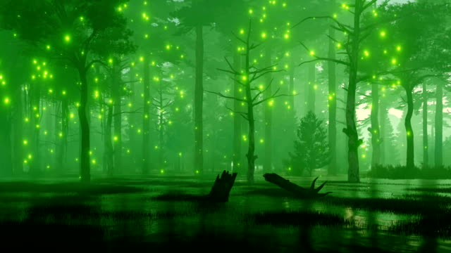 Fairy lights on a fantasy night forest swamp video