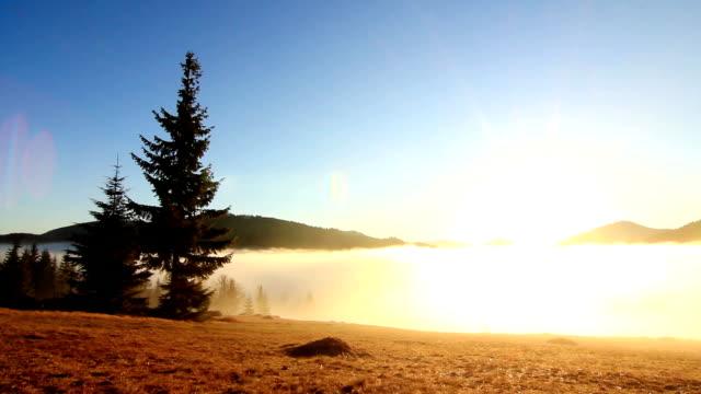 sagoskog - solstrålar i spruce skogsmark - städsegrön växt bildbanksvideor och videomaterial från bakom kulisserna