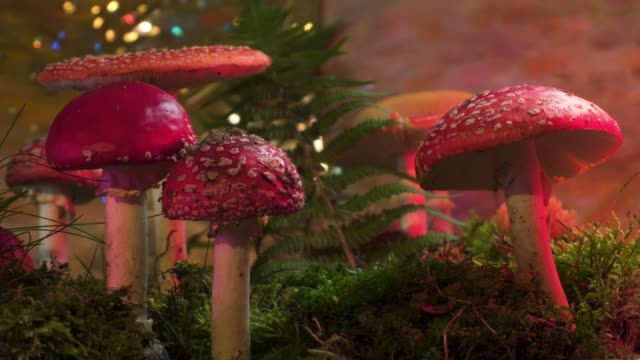 Fairytale scene of mushrooms in the forest