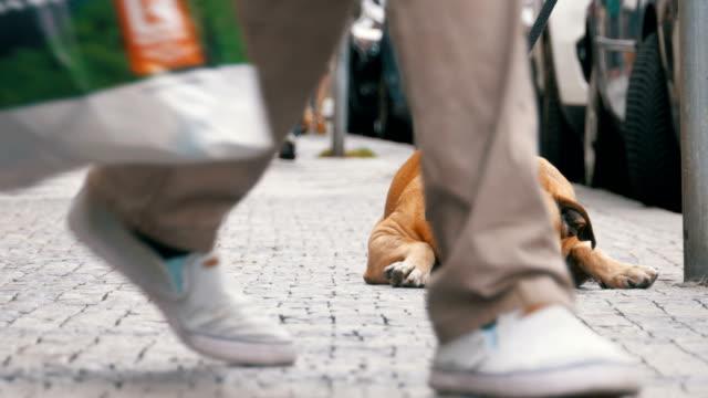Treuen elende Hund liegend auf dem Bürgersteig und Besitzer warten. Die Beine der Masse nicht gleichgültig Passanten – Video
