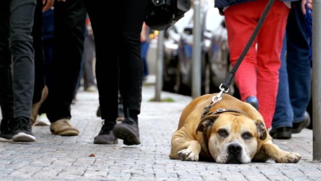 Treuen unglückliche Hund liegend auf dem Bürgersteig und Besitzer warten. Die Beine der Masse nicht gleichgültig Menschen vorbei – Video