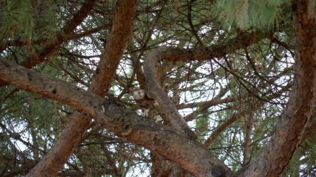 Falcon Branch Tree - video