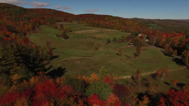Fall Colored Forest Surrounding Field video
