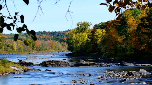 Fall colors along river video