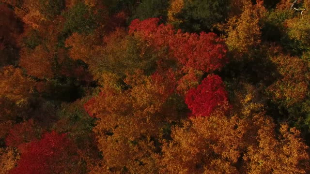 Fall Colors From Above video