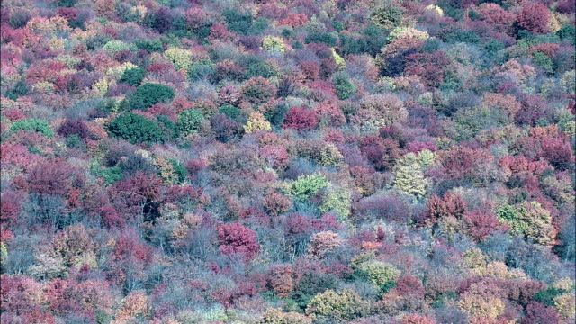 Fall Colors Near  - Aerial View - Massachusetts,  Middlesex County,  United States video