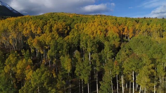 vídeos de stock, filmes e b-roll de drone de folhagem de outono no colorado - aspen colorado