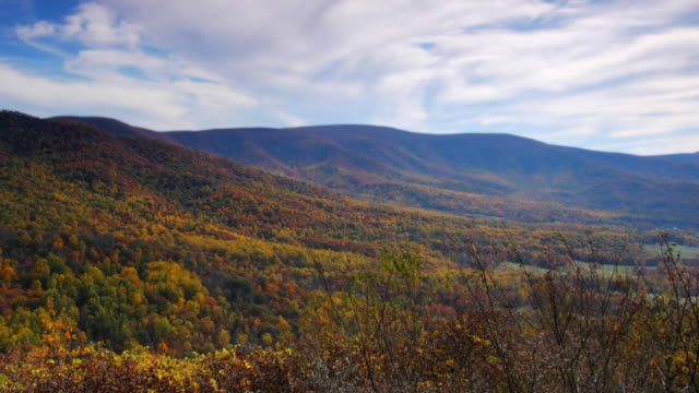 Fall foliage video