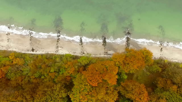 Fall forest from above video