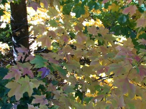 caduta foglie, lenta inclinazione - parte della pianta video stock e b–roll